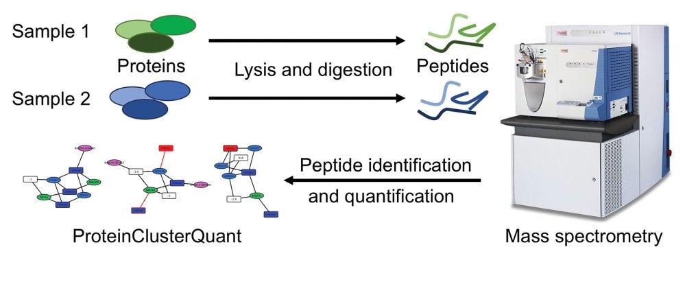 medium resolution of protein digestion diagram