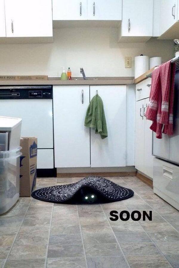 182) 20-02-14 soon-(gato)-Humor