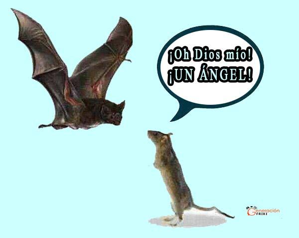 413) 14-05-14 rata-murcielago-Humor