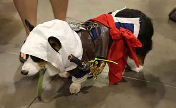 15-Perro-Assassins-Creed-15