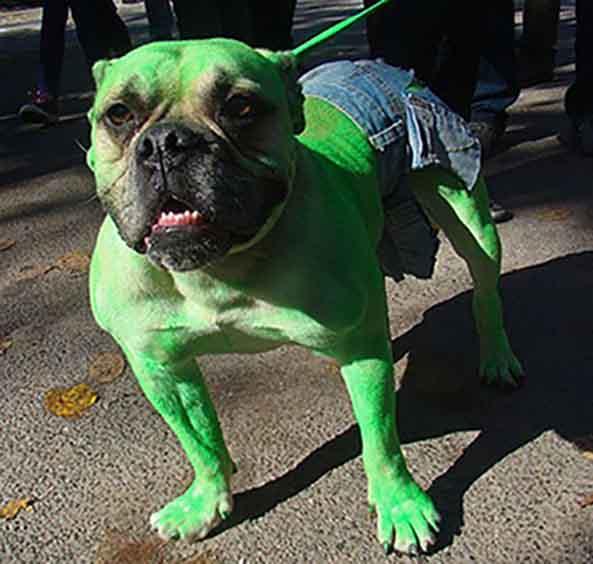 19-Perro-Hulk-19