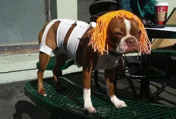 2-Perro-Leeloo-Dallas-2