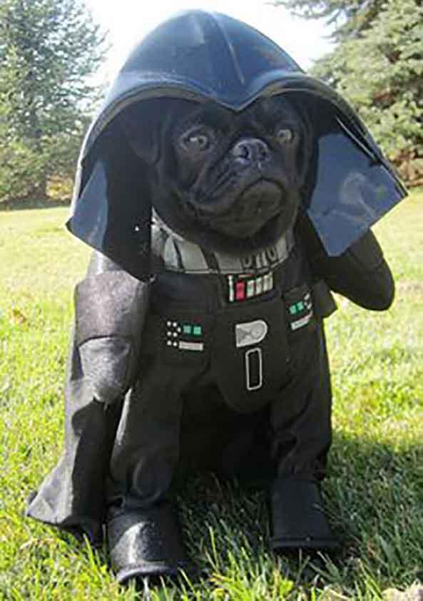 4-Perro-Darth-Vader-4