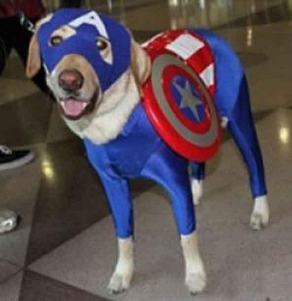 5-Perro-Capitan-America-5