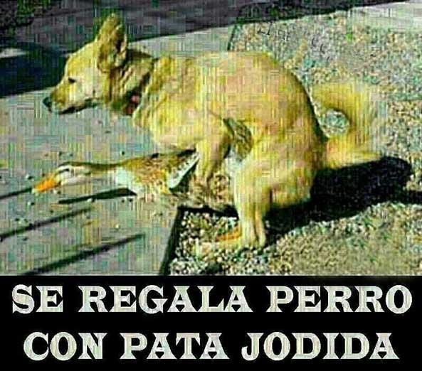 743) 14-11-14 perro-con-pata-jodida-Humor