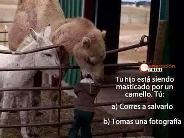 844) 03-02-15 hijo-masticado-camello-Humor