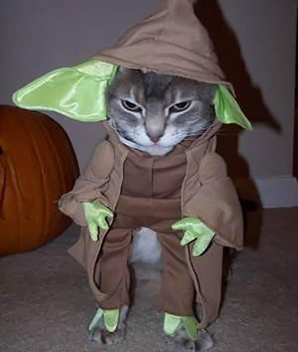 Yoda-Star-Wars-15