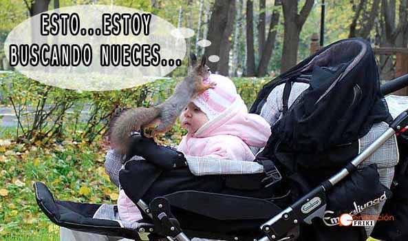 1029) 14-08-15 Ardilla-busco-nueces-Humor
