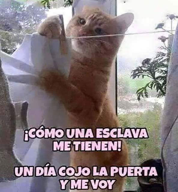 1145) 14-12-15 gato-esclavo-Humor