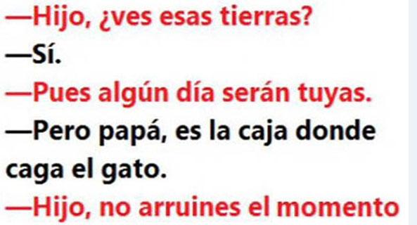 1260-12-04-16-tierras-caja-gato-humor