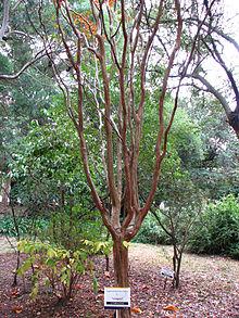 l arbre vert