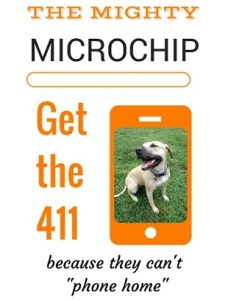 microchips 411 vs 2