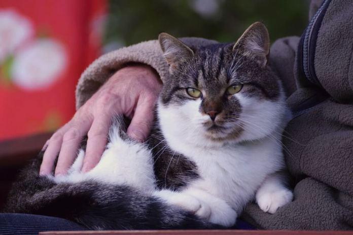 I benefici per la salute del possedere un gatto