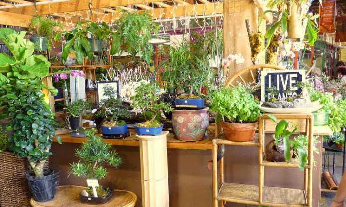 Giardinaggio indoor per principianti nozioni di base che dovresti sapere