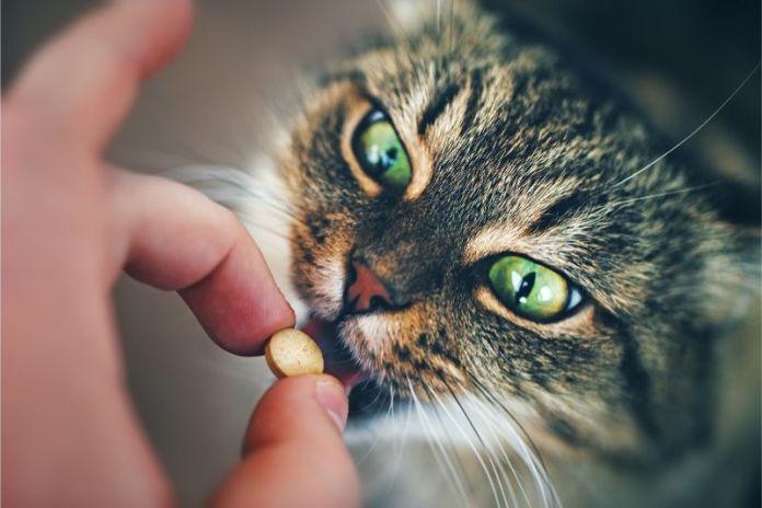 Pillola dura da ingoiare Non con tasche per pillole appositamente