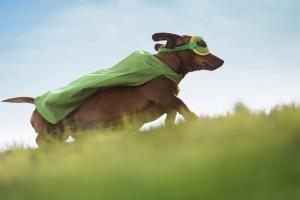 Protezione degli animali domestici The Spring Season Edition