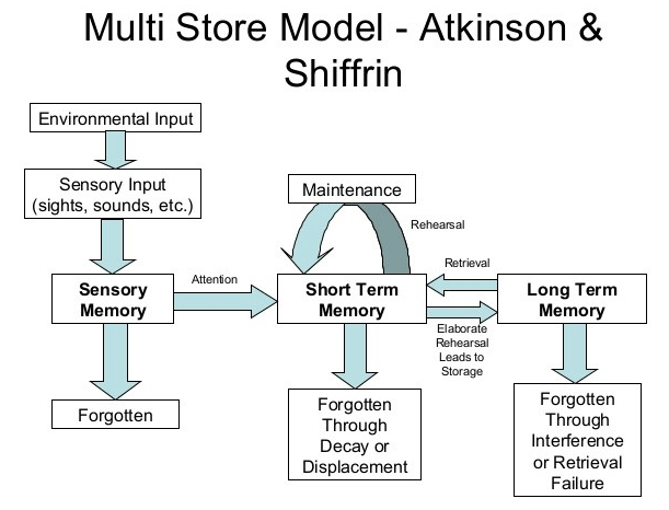 The Atkinson-Shiffrin Memory Model