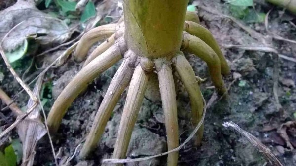 Plants with Prop Roots