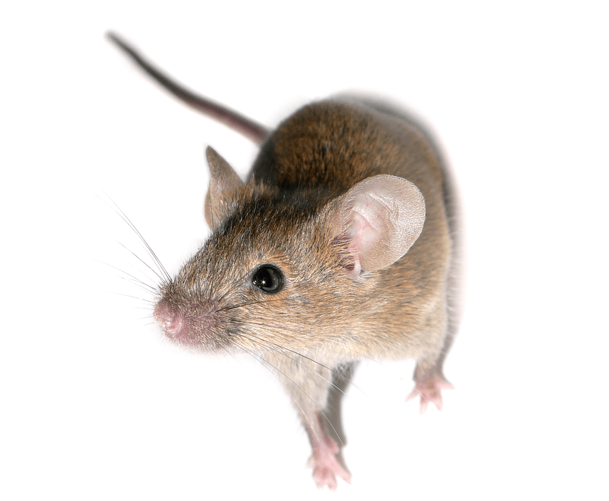 The Value Of Knockout Mouse Models | A Detailed Analysis