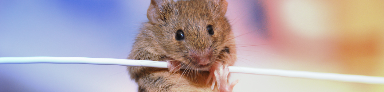 Conditional Knockout Mice | 100% Guaranteed Delivery