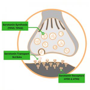 Your genes affect your serotonin levels - Genetic Lifehacks