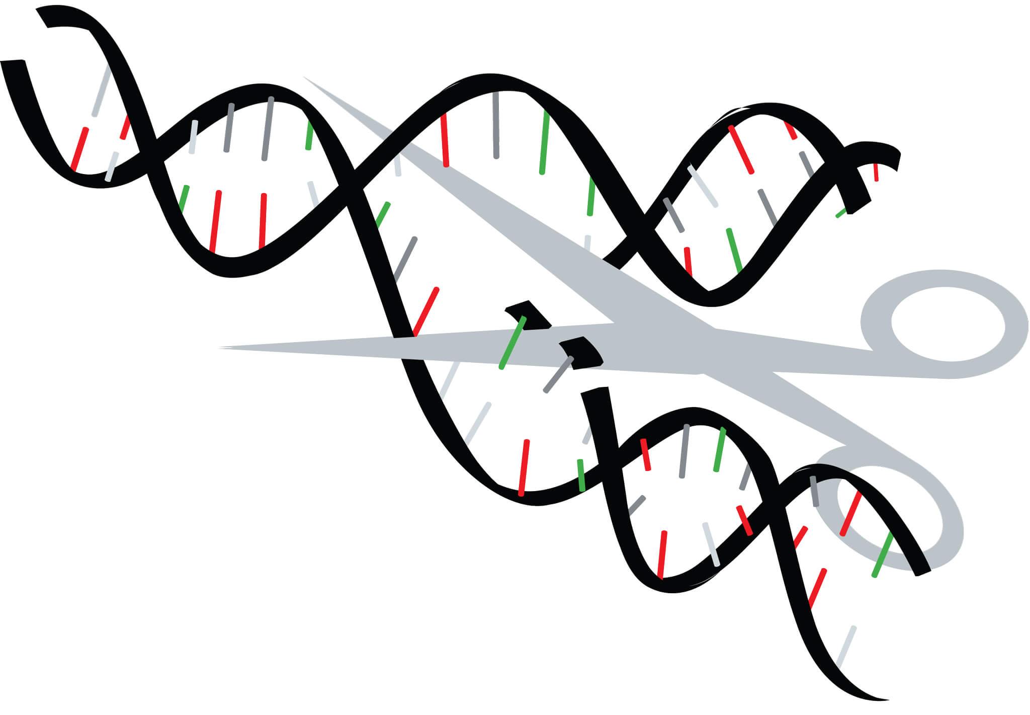 Gene editing could circumvent restrictive GMO regulations