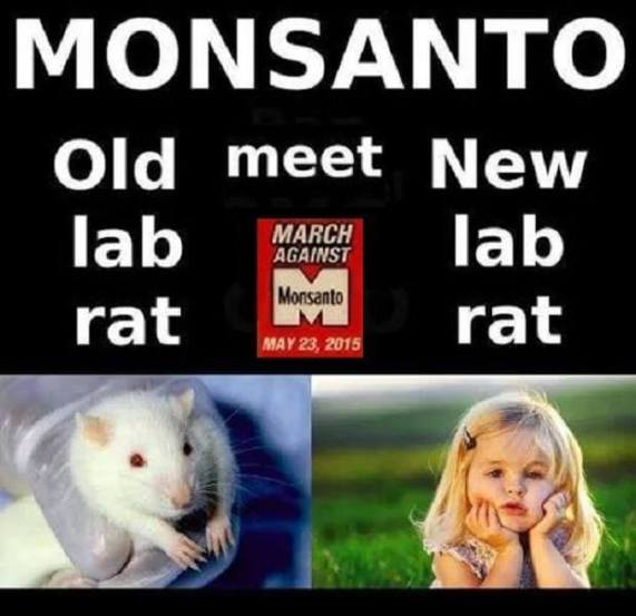 little girl next to lab rat