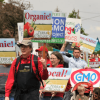 In wake of National Academies' GMO report, is public skepticism of biotech waning?