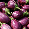 Philippine Supreme Court rebuffs Greenpeace, opens path for GMO eggplant commercialization