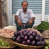 Anti-GMO activists can't admit success of Bangladesh's insect-resistant GMO eggplant