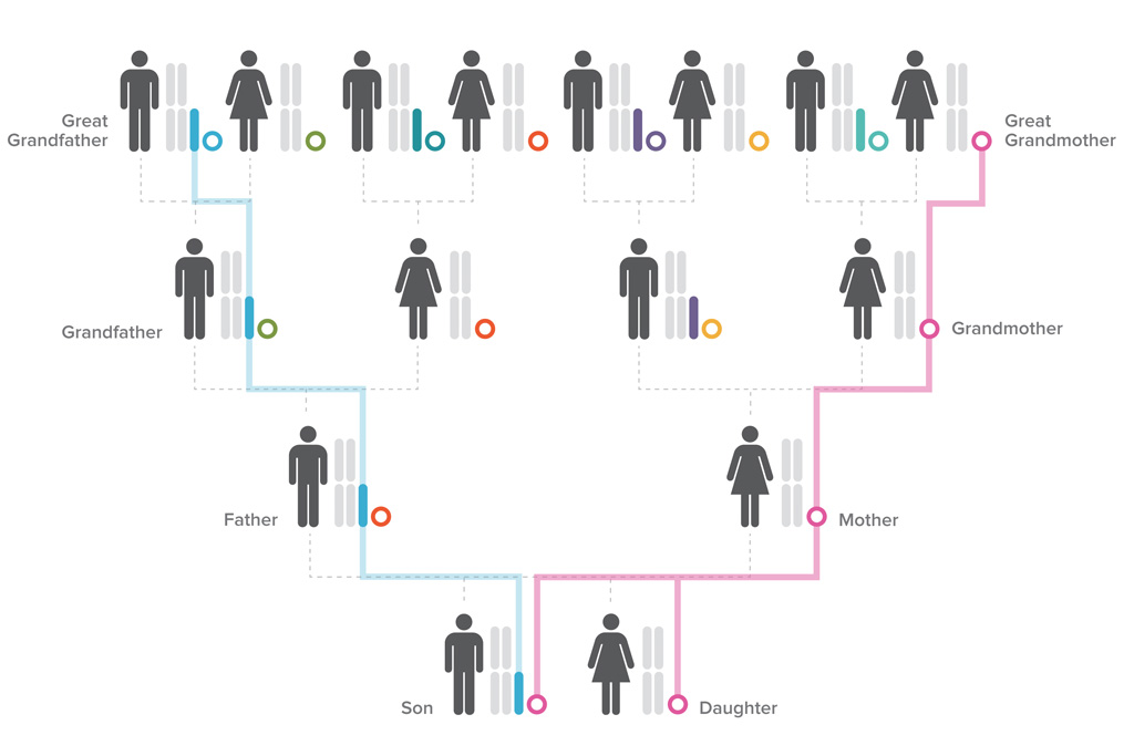 Are You Genetically Closer to Your Parents or Siblings