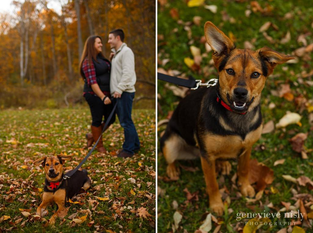 Copyright Genevieve Nisly Photography, Engagements, Fall, North Chagrin Reservation