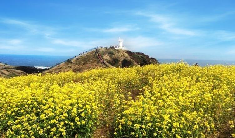 15 Tempat Menarik Di Jeju Yang Semestinya Buat Anda Jatuh Cinta dengannya 4