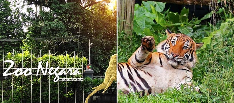 Jom Sumbang Untuk Haiwan DI Zoo Negara. Mereka Juga Memerlukan Di Saat PKP Ini 1
