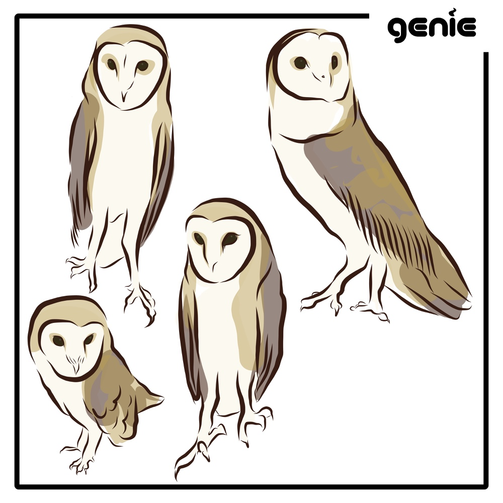 Barn Owl Bird Vector Graphic Illustration Hand Drawn Drawing Sketch - Royalty Free Digital Instant Download PDF SVG PNG