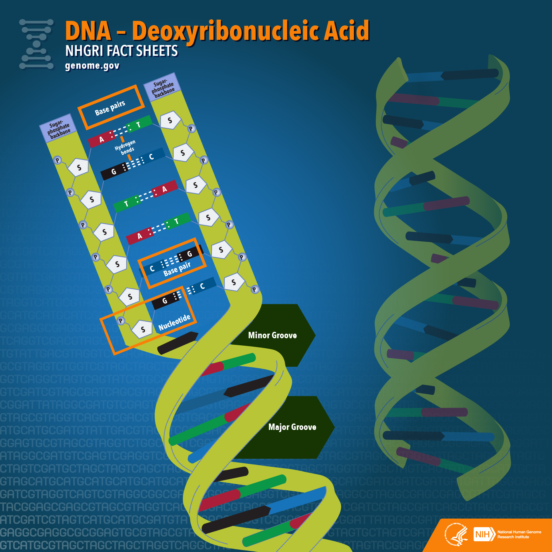 hight resolution of what does dna do