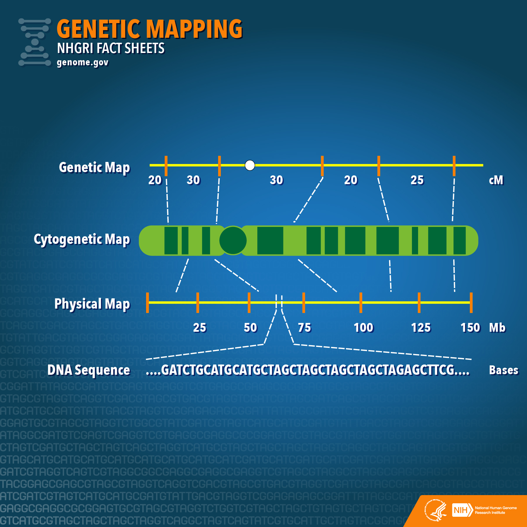 hight resolution of genetic mapping diagram