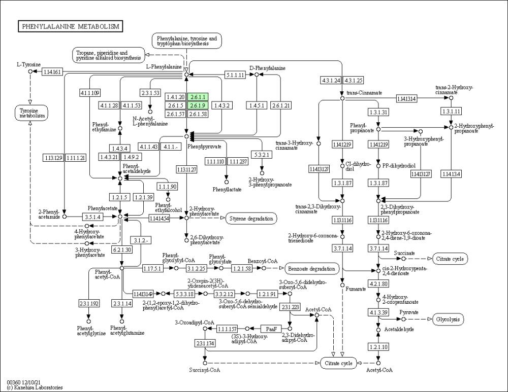 medium resolution of graphical representation of phenylalanine metabolism baumannia cicadellinicola hc symbioint of homalodisca coagulata glassy winged sharpshooter
