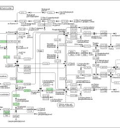 graphical representation of glycerophospholipid metabolism baumannia cicadellinicola hc symbioint of homalodisca coagulata glassy winged sharpshooter  [ 1324 x 900 Pixel ]