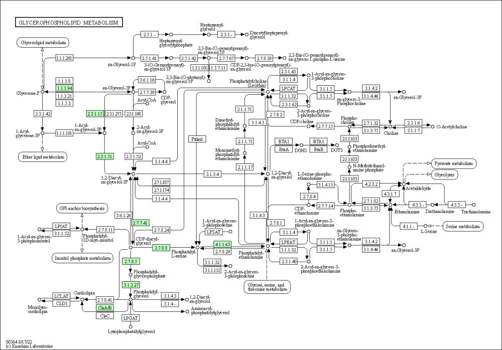 medium resolution of graphical representation of glycerophospholipid metabolism baumannia cicadellinicola hc symbioint of homalodisca coagulata glassy winged sharpshooter