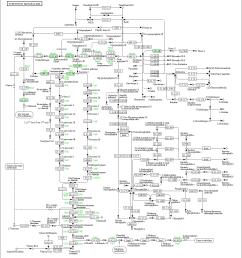 representation of porphyrin and chlorophyll metabolism baumannia cicadellinicola hc symbioint of homalodisca coagulata glassy winged sharpshooter  [ 1363 x 1434 Pixel ]