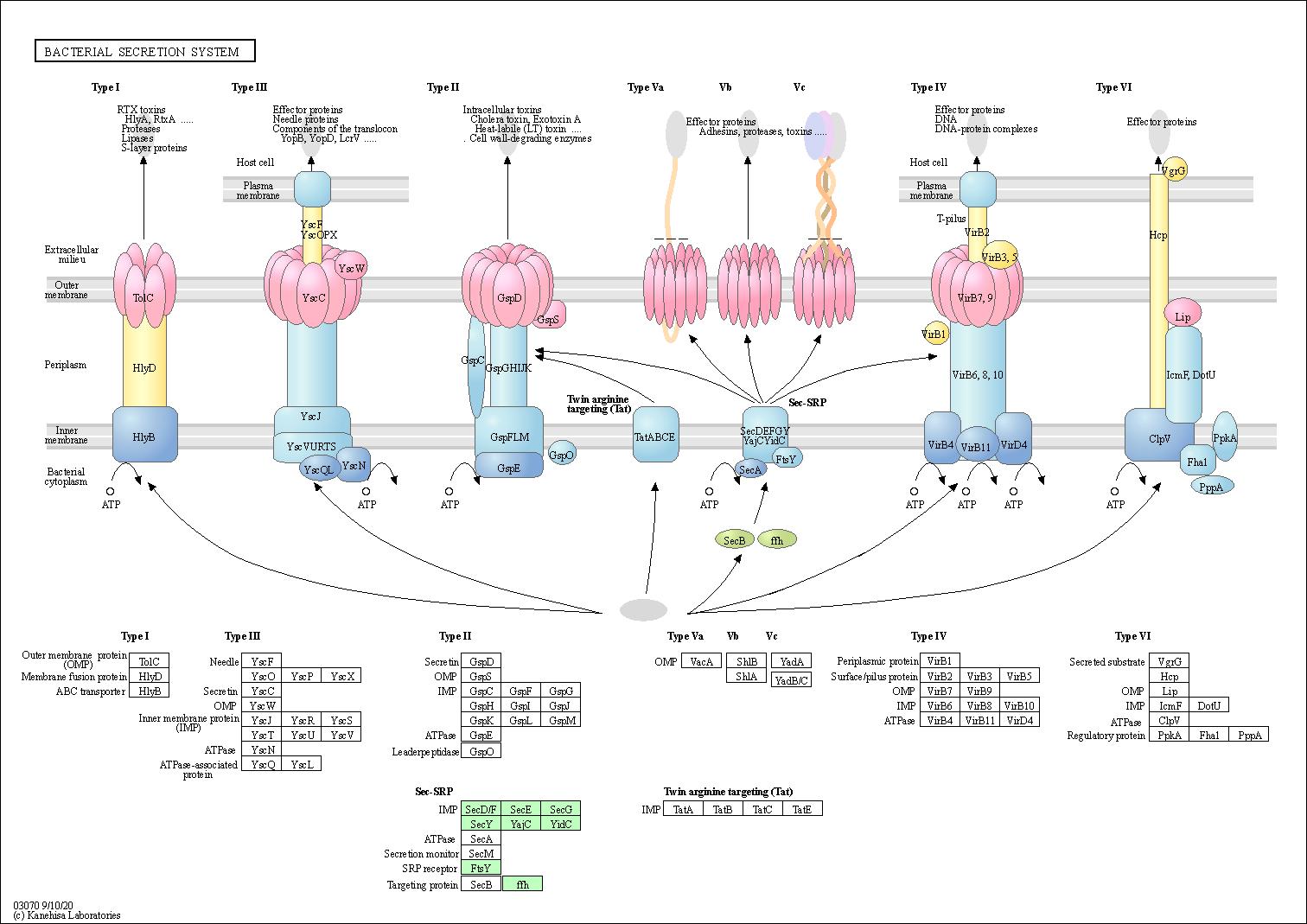 hight resolution of graphical representation of bacterial secretion system baumannia cicadellinicola hc symbioint of homalodisca coagulata glassy winged sharpshooter