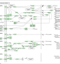 lung diagram cow [ 1369 x 1200 Pixel ]