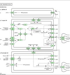 diagram of sensory pathway [ 1073 x 1007 Pixel ]