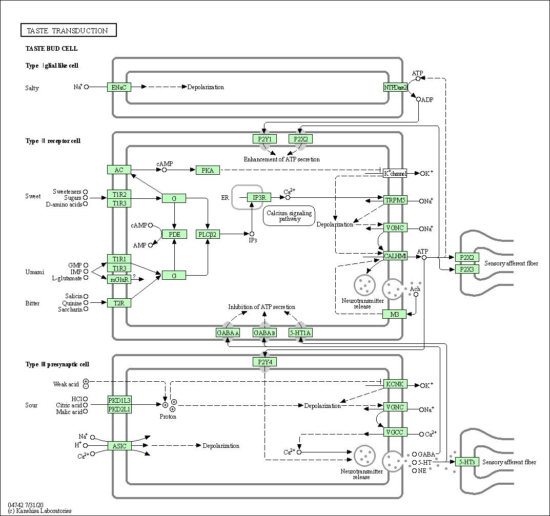 hight resolution of diagram of sensory pathway