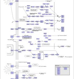 pathophysiology of measle diagram [ 1201 x 1713 Pixel ]