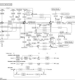 sulfur cycle diagram explanation [ 1090 x 1048 Pixel ]