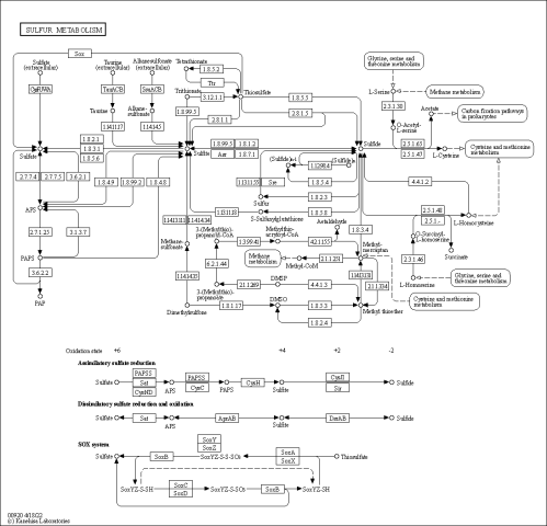 small resolution of sulfur cycle diagram explanation