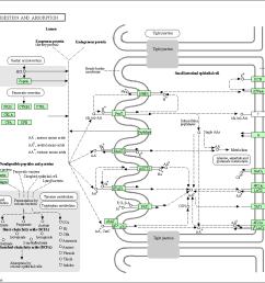 protein digestion diagram [ 1161 x 958 Pixel ]
