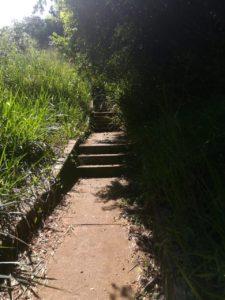 La alta vegetación que rodea los senderos peatonales que unen a Altos de Pan de Azúcar con otros sectores, imposibilita el libre paso de los peatones y propicia inseguridad.    - Suministrada/GENTE DE CABECERA